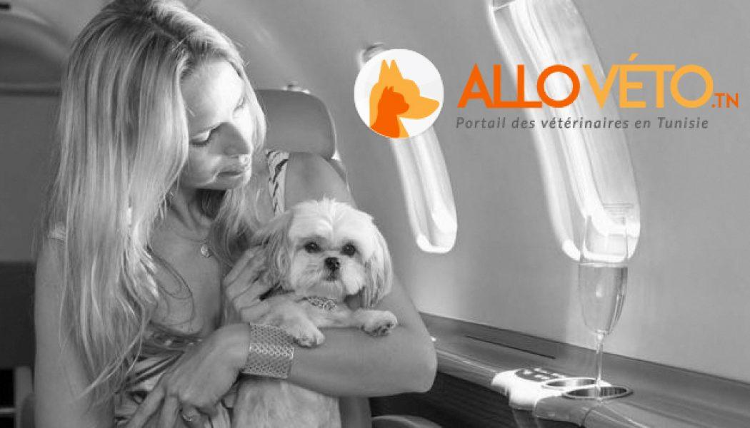 Prendre l'avion avec votre chien